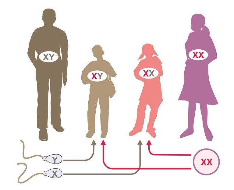 Nên quan hệ trước và sau ngày rụng trứng 3 tới 5 ngày để sinh con gái