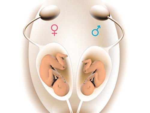 Rụng trứng là thời điểm nên quan hệ để sinh con trai